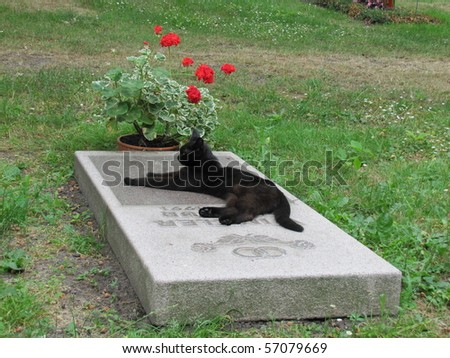 The grieving cat on a grave stone - stock photo