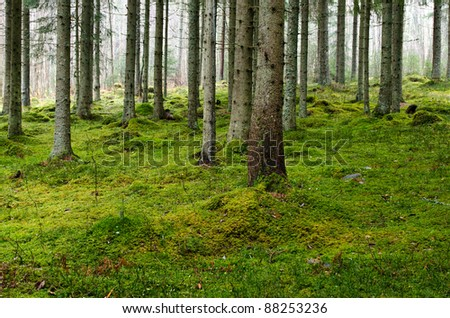 The ground in the forest in the fall with fog in the background - stock photo