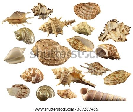 The group of 19 natural colorful conchs (seashells) isolated on a white background. Collage of my downscaled pictures. - stock photo