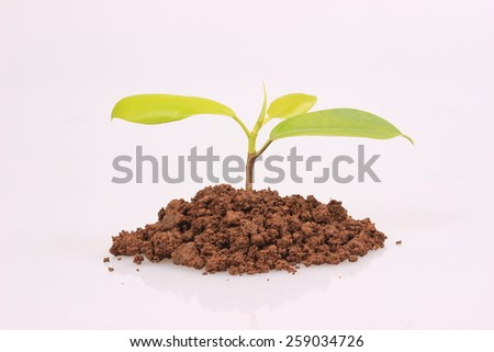 The growth of the seedling - stock photo