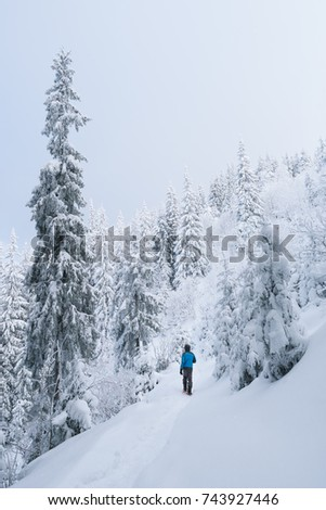 The guy looks at the high spruce. Winter in a mountain forest. Trees in the snow