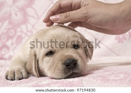 The hand irons a small puppy