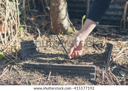 The hand of a woman planting a small tree