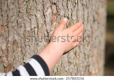The hands of children who touch the tree - stock photo