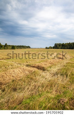 The harvested wheat field and sky with thunder clouds. - stock photo