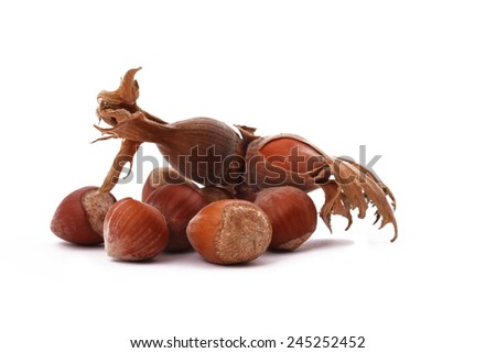 The Hazelnut and in the leaf on white background