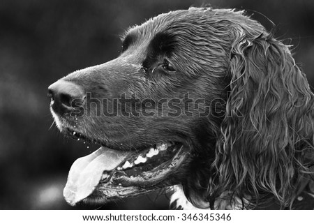 The head of a wet, panting, black dog.