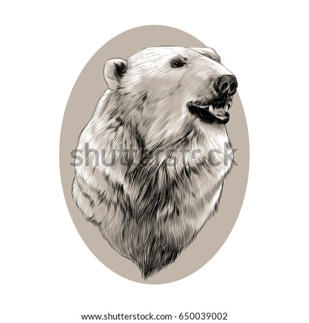 polar bear face template - oval head stock images royalty free images vectors