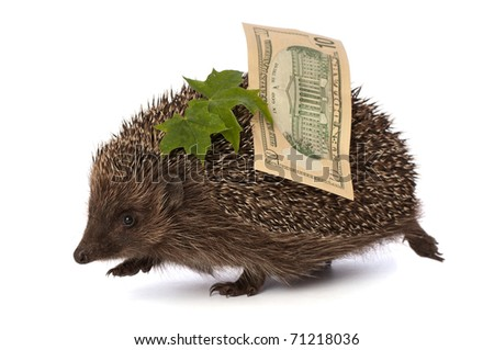 The hedgehog in motion hastens home from the bank carrying percent ten dollars profit - stock photo