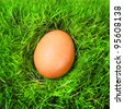 The hen egg in fresh spring grass. Organic food concept. - stock photo