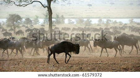 The herd of migrating antelopes goes on dusty savanna. - stock photo
