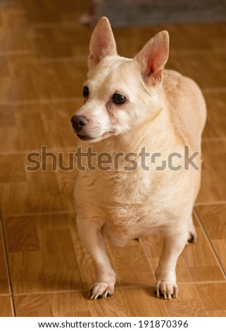 The homeless not purebred dog thrown by people