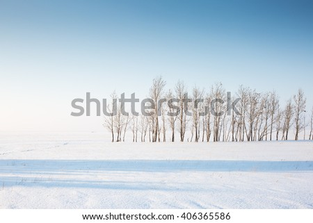 the horizon, trees and snow in the forest in winter - stock photo