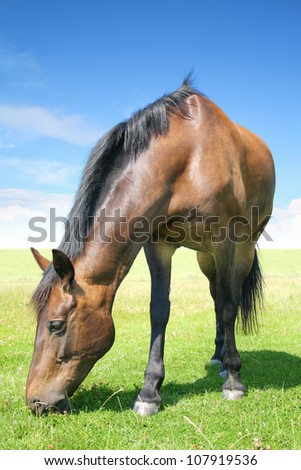 The horse from the beautiful north germany - stock photo