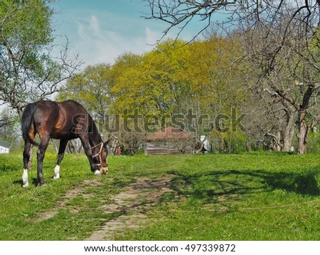 The horse grazing in the village