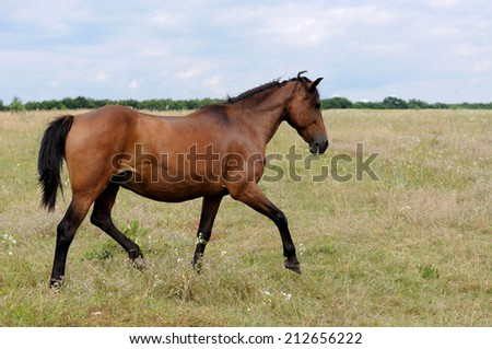 The horse in the pasture . - stock photo