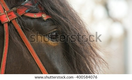 The horse's eyes, mouth bits - stock photo