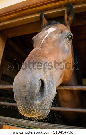 The horse's head looking out a stable - stock photo