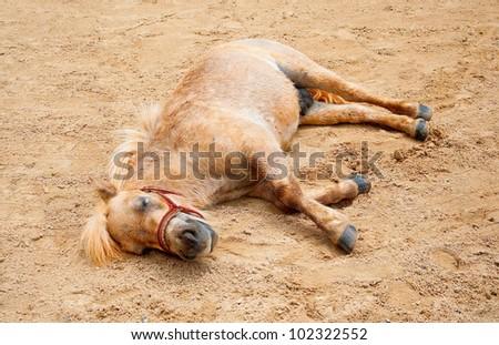 The Horse was sleepy on sand floor ground - stock photo