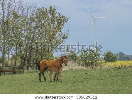 The horse with a foal on a green meadow. - stock photo