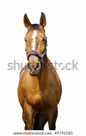 The horse with white stripe - stock photo