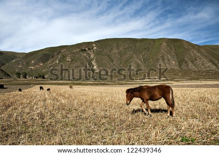 the horses eating grass under the sunshine.