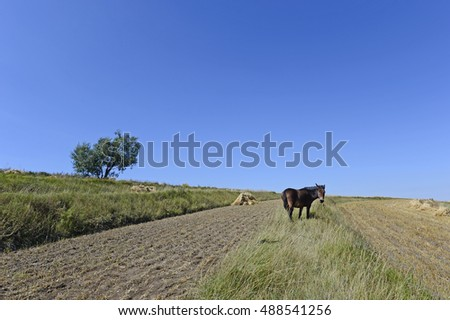 The horses in the grasslands of autumn