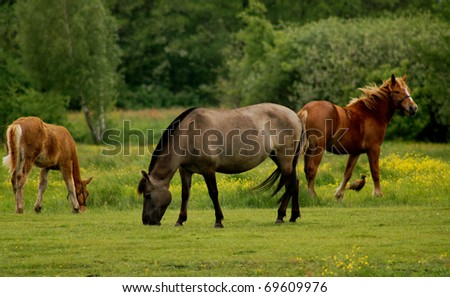 The horses with pheasant on pasture - stock photo