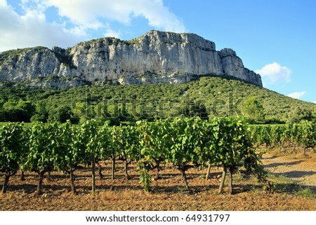 """The Hortus (rock mountain) viewed from a vineyard: Mountain is situated in Languedoc, France, north of Montpellier. The area is famous for its wine called """"vin de l'Hortus"""", named after the mountain. - stock photo"""
