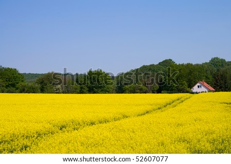 The house is buried in a field of rapeseed in Germany. - stock photo
