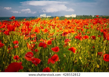 The huge field of red poppies flowers. Sun and clouds.