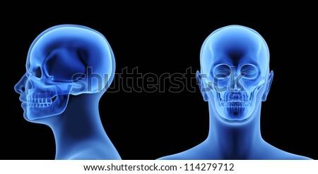 The Human Body - Skull - stock photo