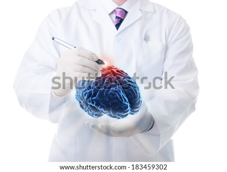 The human brain - stock photo