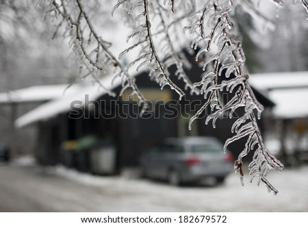The icy branch and winter trees in snow - stock photo