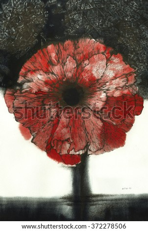 The illustration - drawn with ink, watercolor and pen poppies flower as an imitation of an engraving and an element of flora