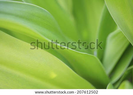 The Image Of A Plant