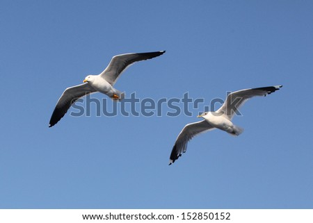 The image of seagulls - stock photo