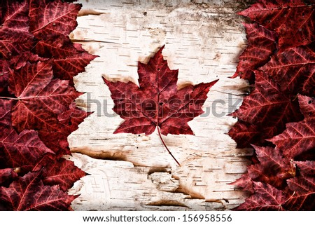 The image of the flag of Canada constructed entirely out of genuine maple leaves and white birch bark from species native to that country.   - stock photo