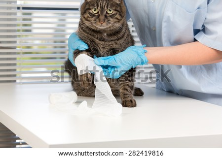 The image with a cat in a veterinary clinic - stock photo