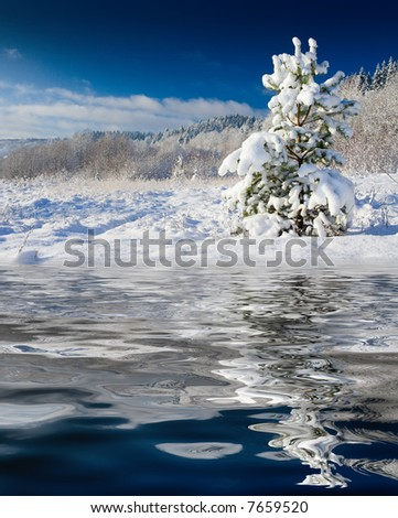 The image with a pine covered with a snow under the blue sky - stock photo