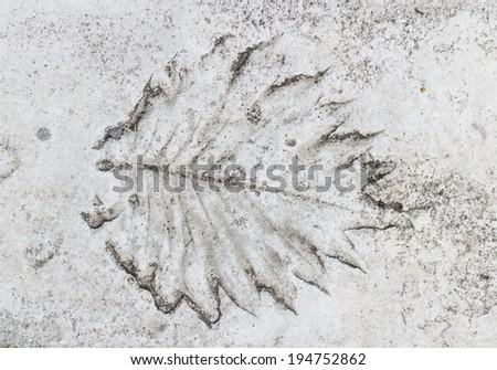 The Imprint leaf on cement floor - stock photo