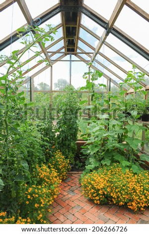 The inside of a greenhouse with tomatoes growing in a traditional English Country Fruit and Vegetable Garden at Rosemoor, close to Torrington, Devon, England, UK - stock photo