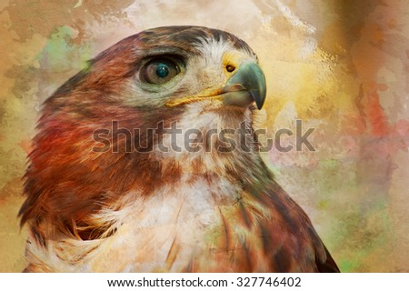 The intense stare of the red-tailed Hawk (Buteo jamaicensis) is obvious in this portrait of the wild animal. A watercolor treatment has been added in post processing. - stock photo