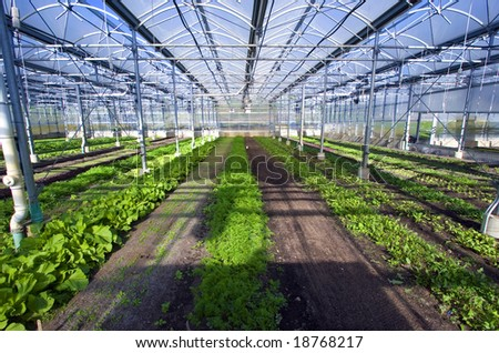 The interior of a large greenhouse. - stock photo