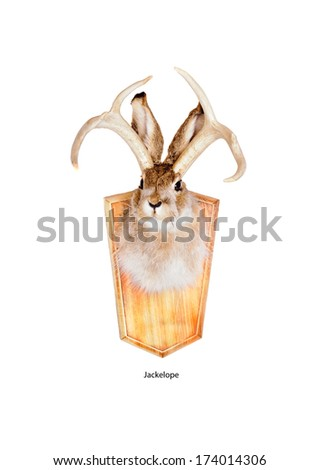 The jackalope is a mythical animal of North American folklore Jackalope head mount (a  humorous joke by a taxidermist using both a jackrabbit and antlers from a deer) isolated on white background - stock photo