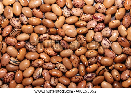 The kidney bean is a variety of the common bean. It is named for its visual resemblance in shape and color to a kidney. - stock photo