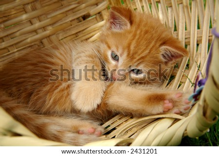the kitten in the basket