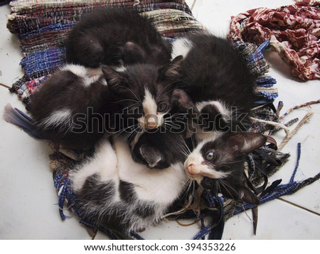 The kittens crowding on the rag for the warm - stock photo