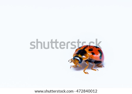 The ladybird beetle sit on the white background