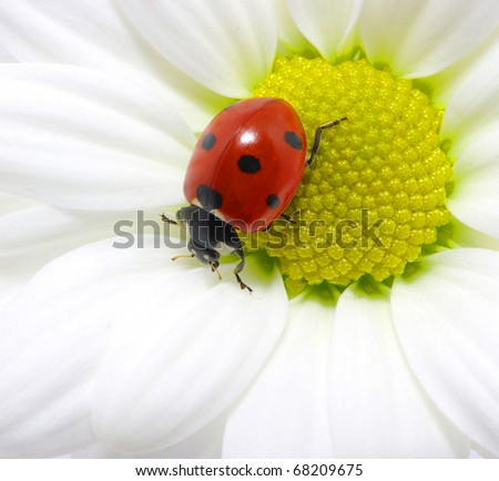 The ladybug  on a flower